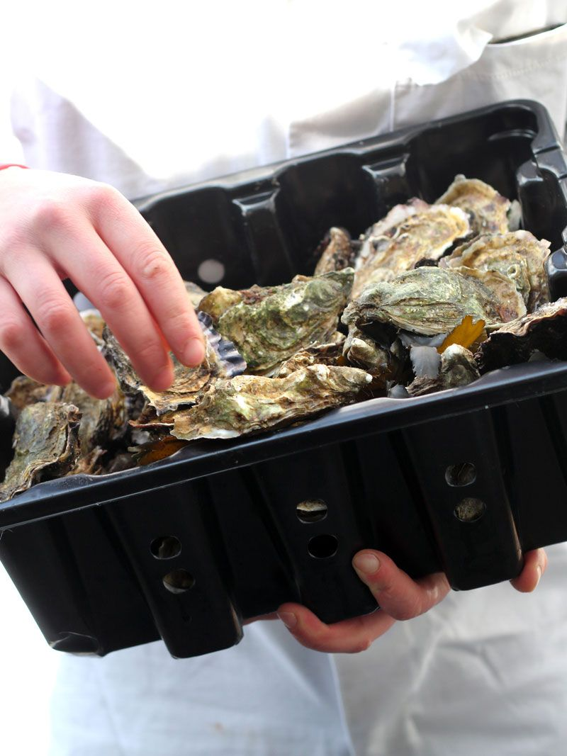 Fresh Atlantic Irish oysters being delivered