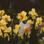 Easter at Home with JP Clarke's